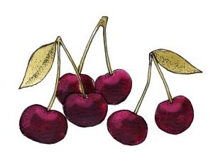 Sangiovese dark cherries